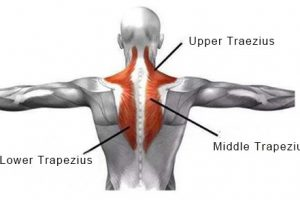 How to use a massage gun to relax the shoulder muscles?